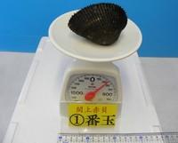 閖上産 赤貝バラ売り 1番玉〔約220g〕本玉1個