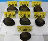 閖上産 赤貝箱売り 7番玉5個入(約0.5kg)