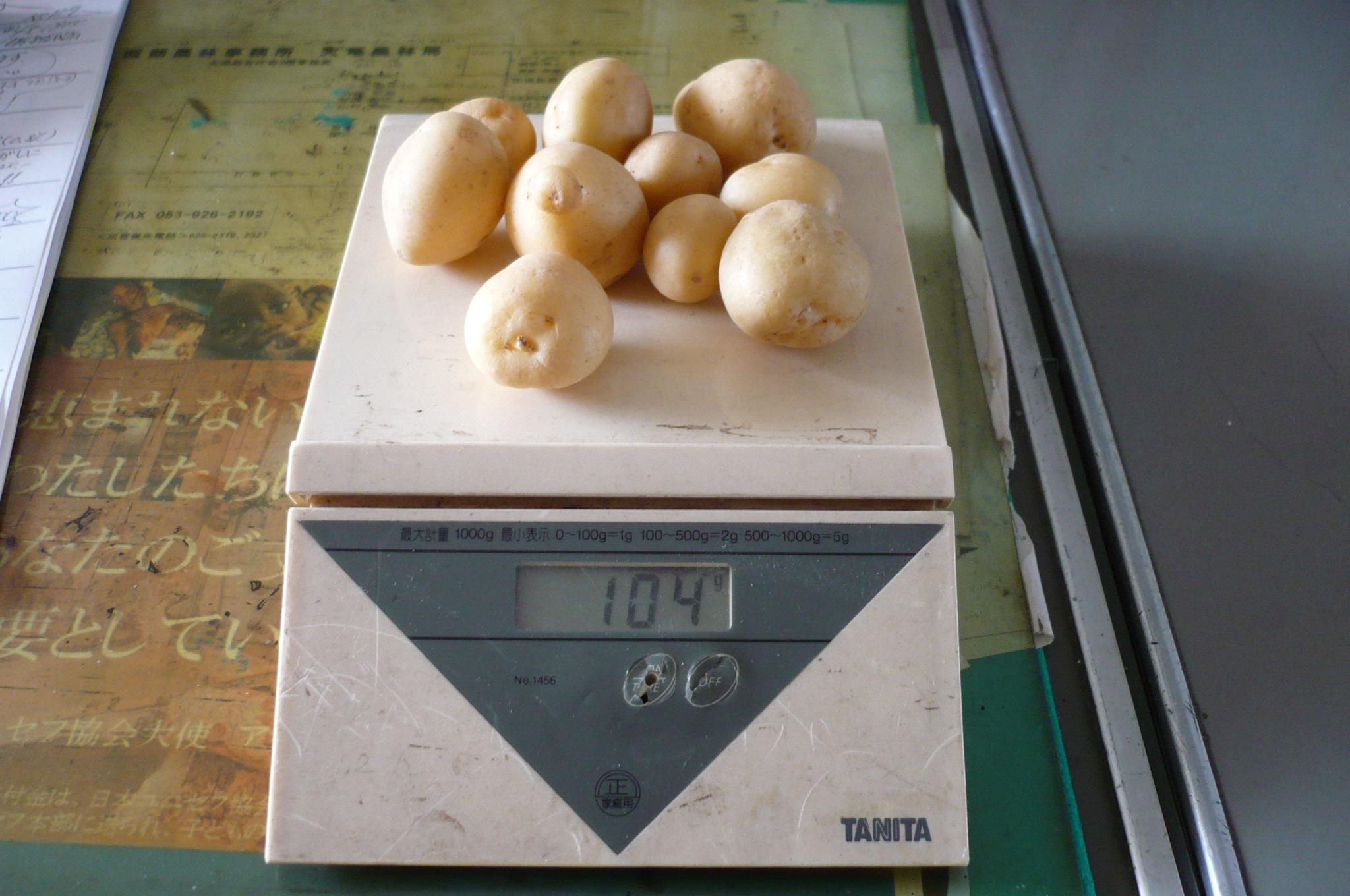 ジャガイモ 植えました。画像