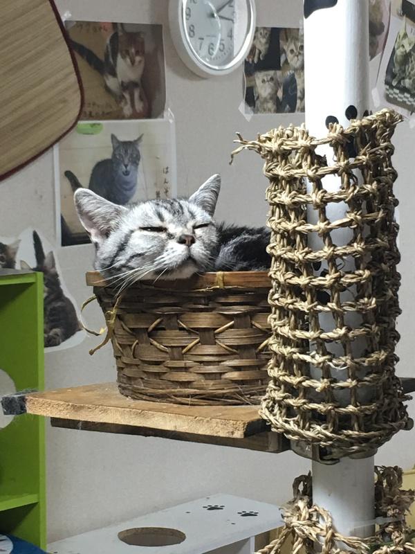 猫は籠が大好きです画像