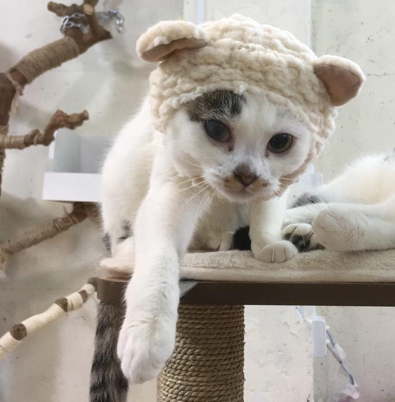 猫とのラブラブ度画像