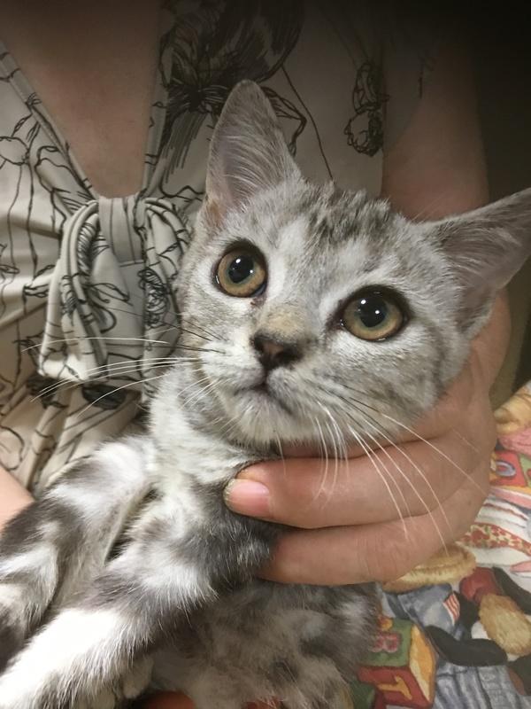 愛知県 キンカロー子猫販売画像